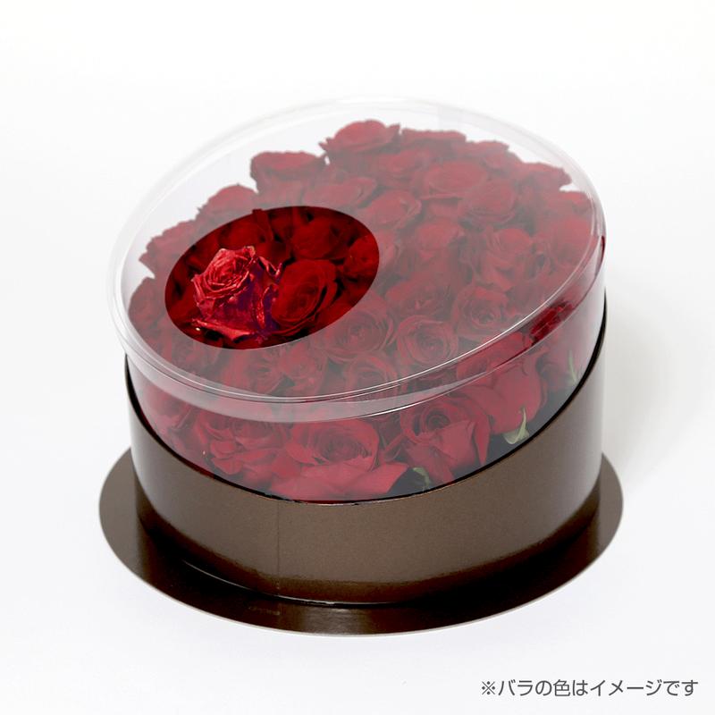 En(red-ガーネット-Jan. 1月)