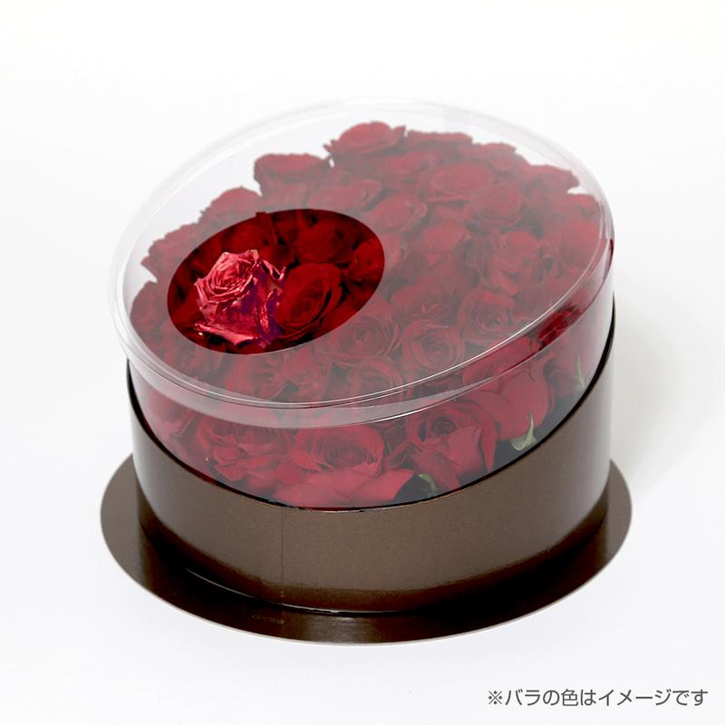 En(red-ルビー-July 7月)