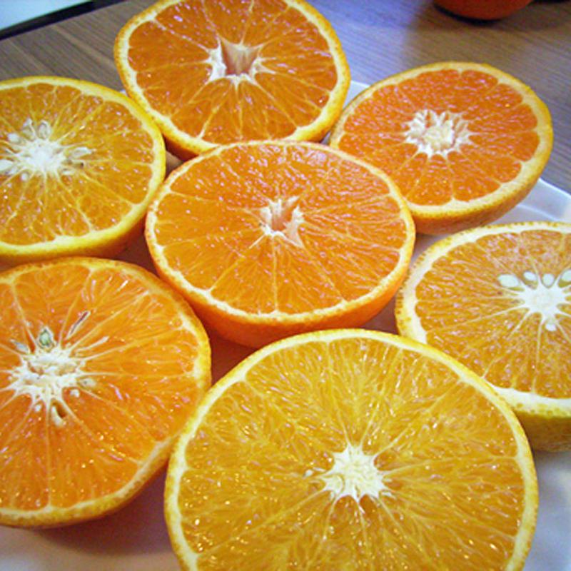 【柑橘ミックス】女神の果実セット(5kg)