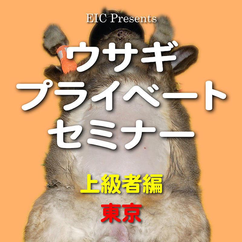 ウサギ プライベートセミナー:上級者編:東京