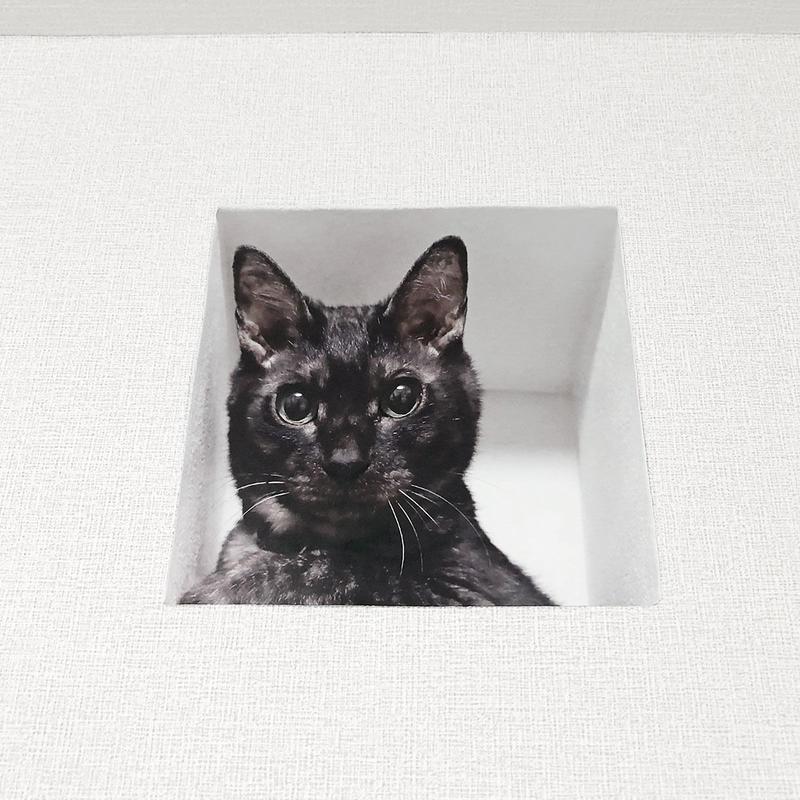 妄想マッピングステッカー/壁からネコ(黒猫)