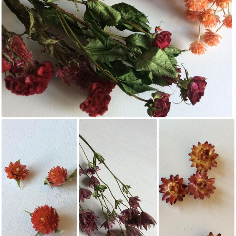花材サンプル♪(レッド)