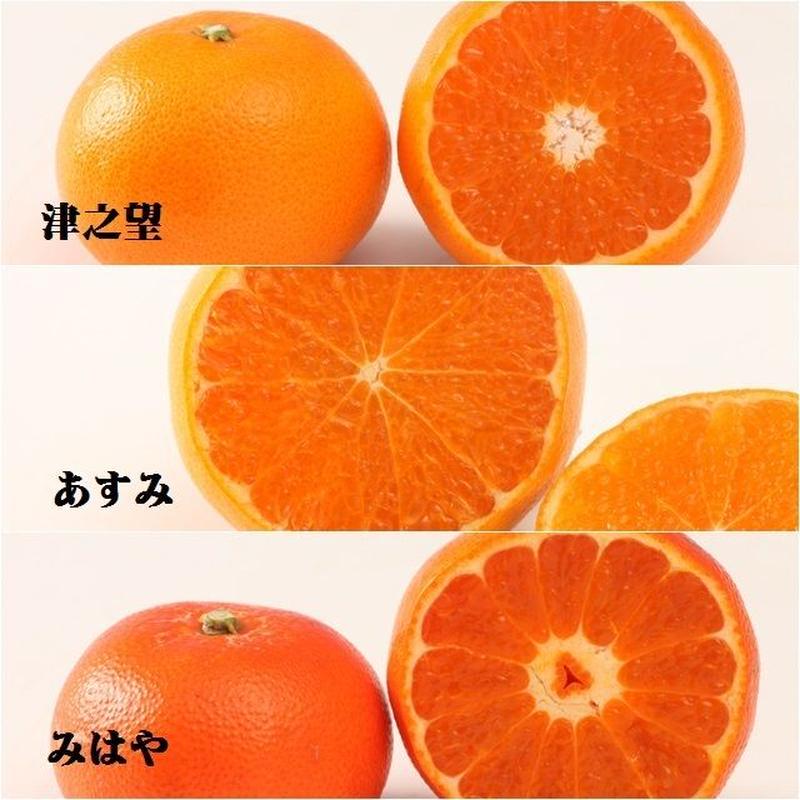 最新ハイブリッド柑橘3種セット12cm9入(00750167)