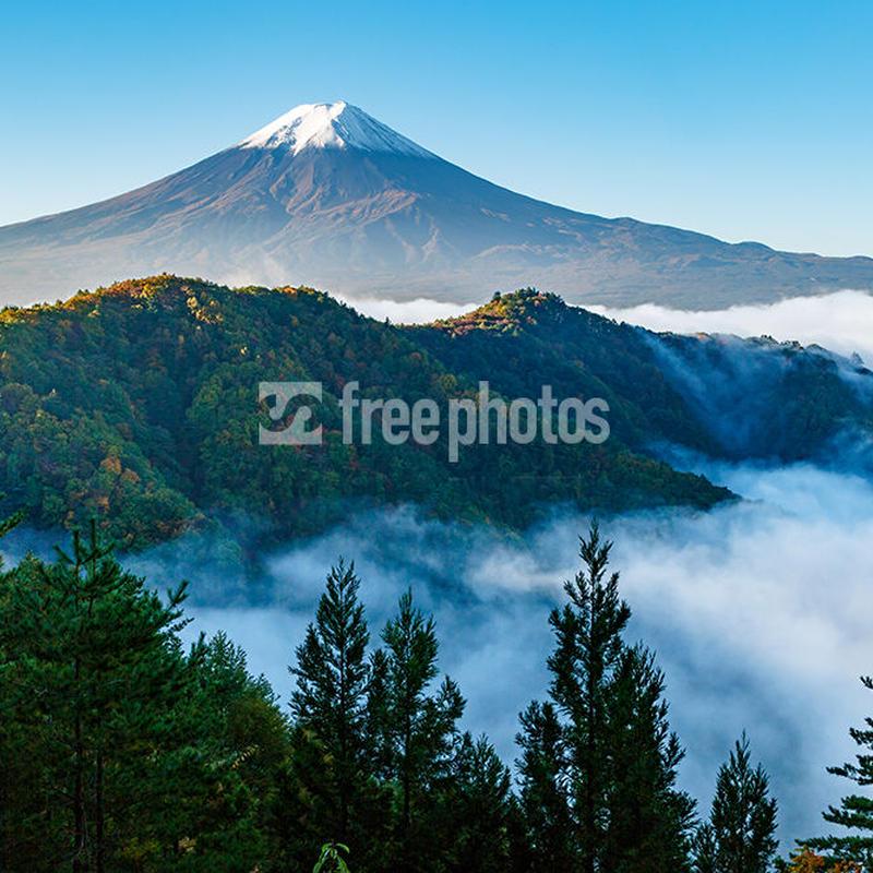 西川林道からの新緑と富士山[富士河口湖町]