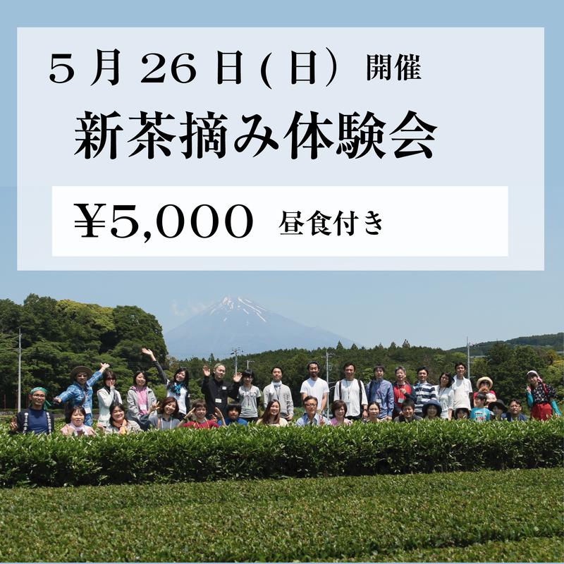 5月26日(日) 新茶摘み体験会
