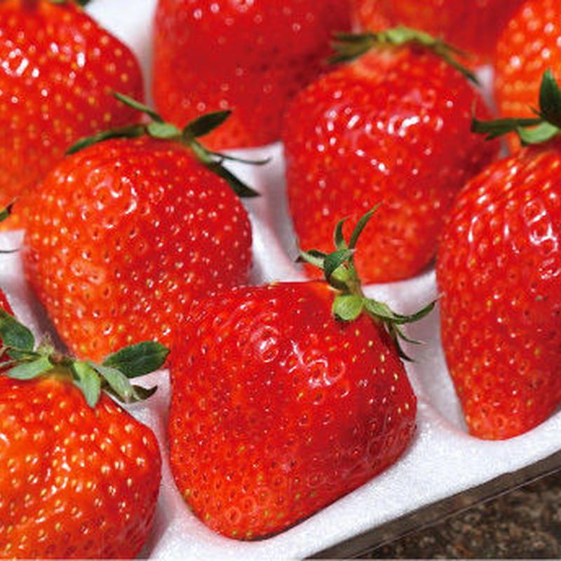 果実職人の極上イチゴ 大玉2パック(1パック450g)