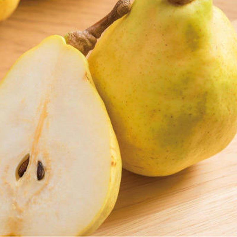 果樹職人の極上ル・レクチェ 2kg