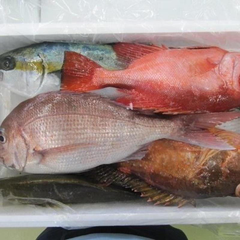 五島列島直送の鮮魚詰め合わせセット10,000