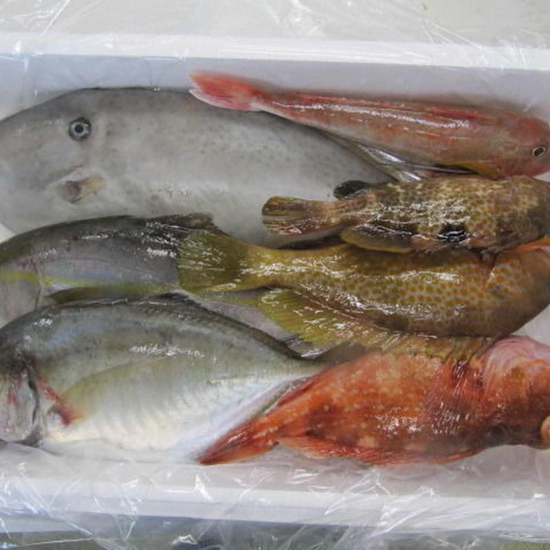 五島列島直送の鮮魚詰め合わせセット5,000