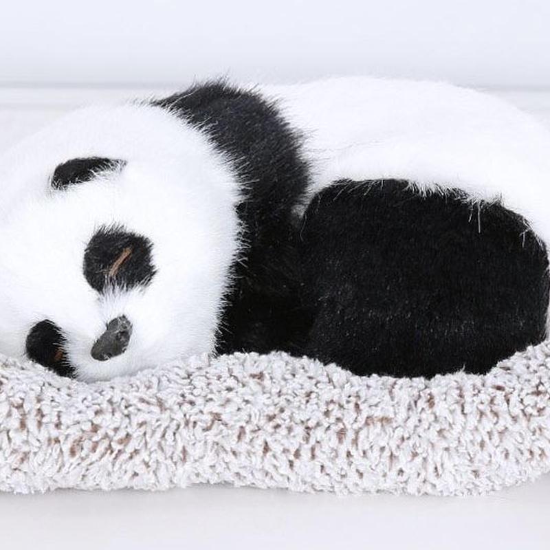 Dream Pets パンダ 活性炭入り 脱臭効果国内未発売