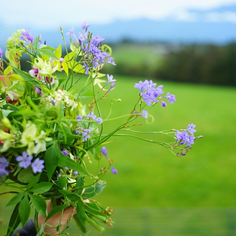 7月6日片桐花卉園×gui 長野の草花を束ねるワークショップ