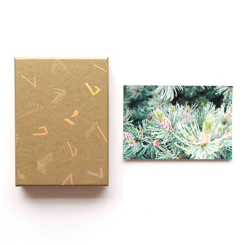 「haconiwa creators 2019」 BOX(山岳収集家/デザイナー 鈴木 優香ポストカード付)