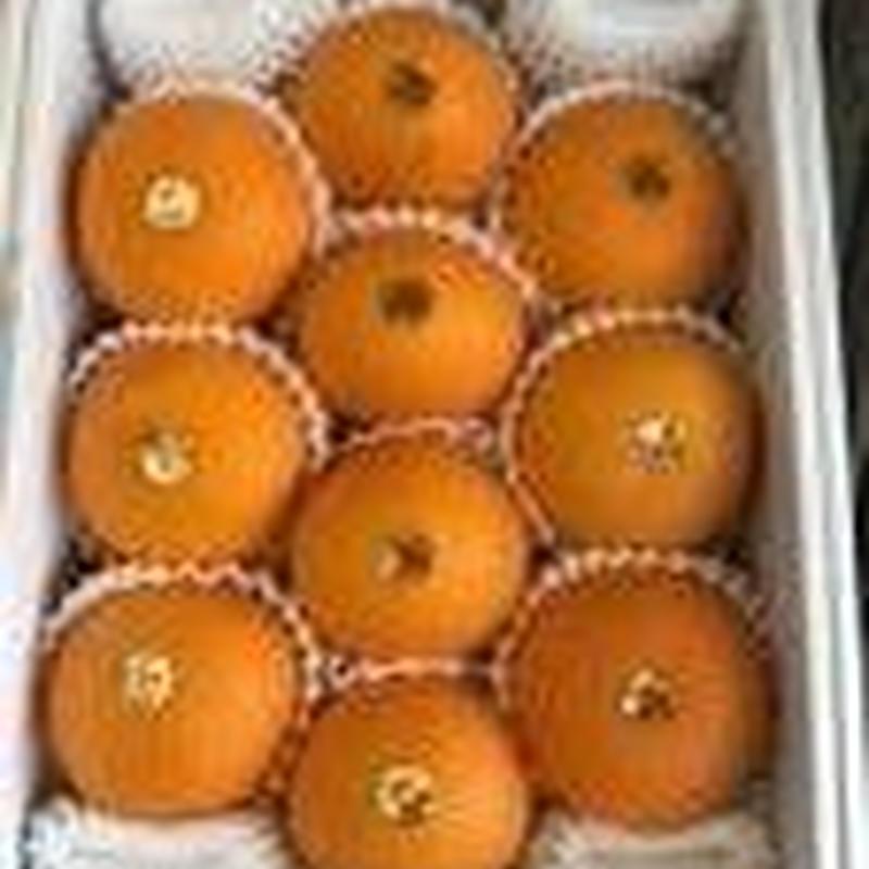 清見オレンジ10玉
