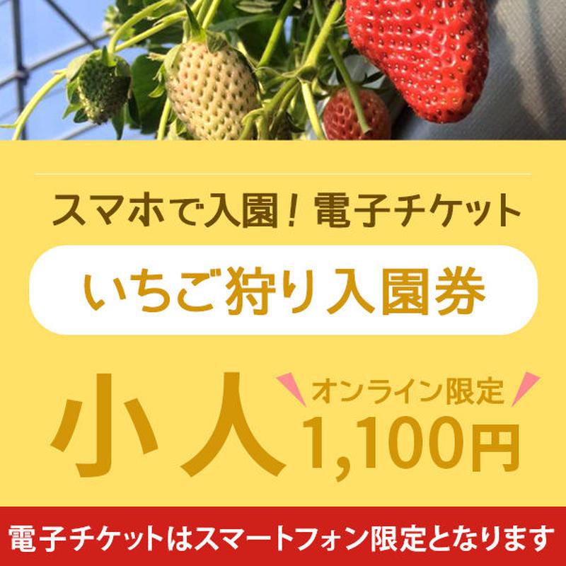 ☆数量限定☆いちご狩り入園券(4月8日~分) 小人(小学生) オンライン購入特典付き