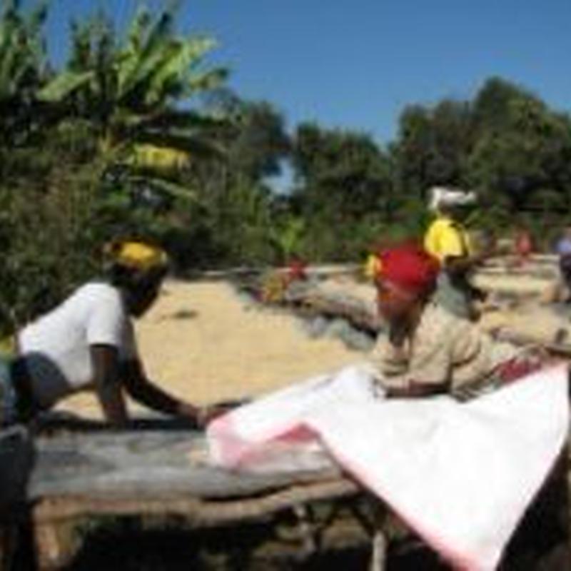 自家焙煎 タンザニア キリマンジャロ アデラ100g