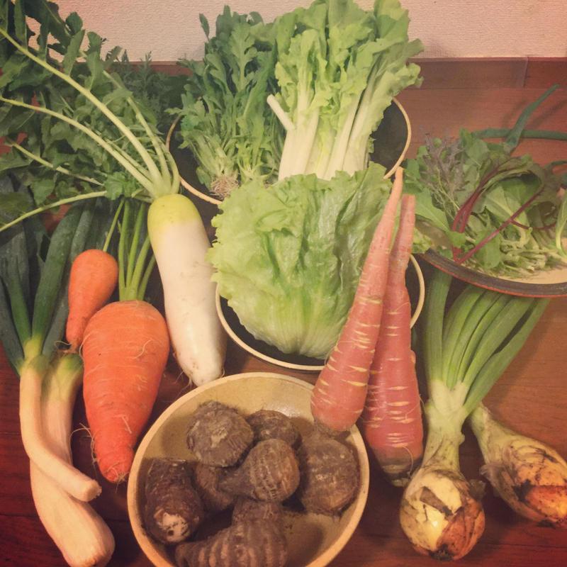旬をいただくお野菜セットA(10点)