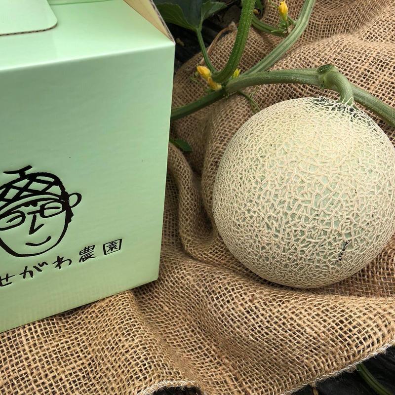自然栽培メロン(600g前後)