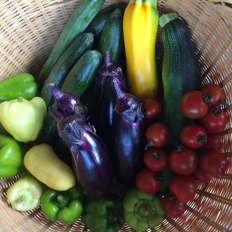5月から野菜おまかせセット(隔週)