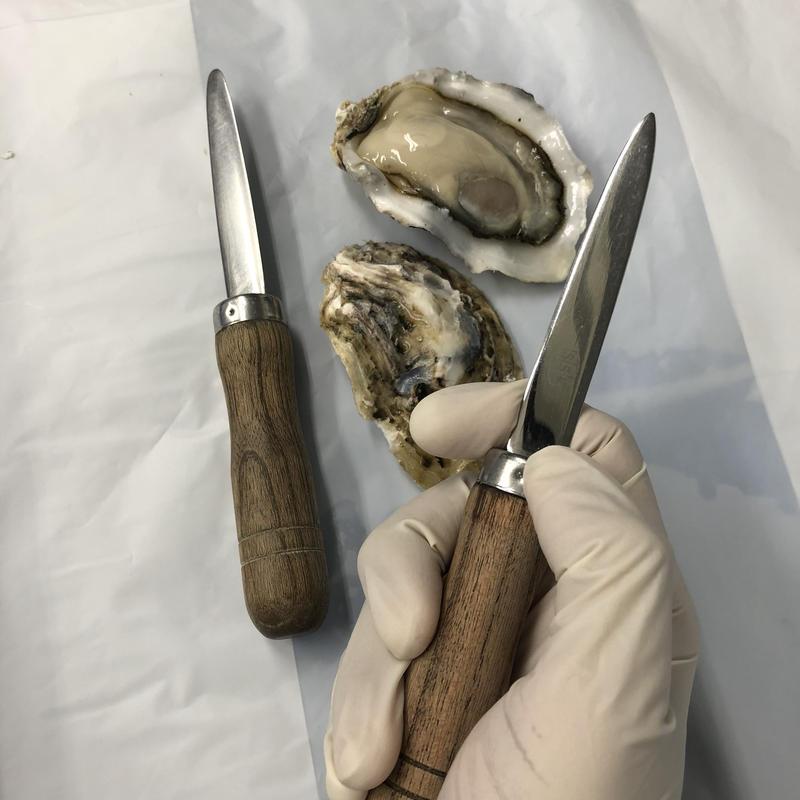"""プロ仕様""""極上かきナイフ"""""""