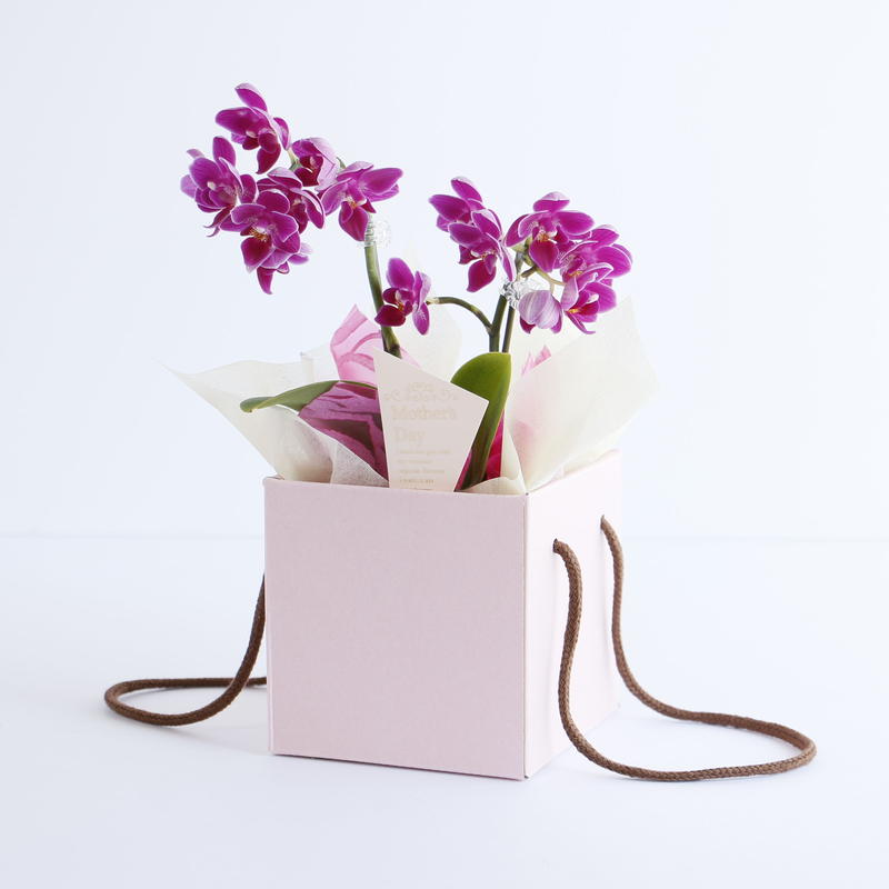 Mother's Day Orchid Lian BOX