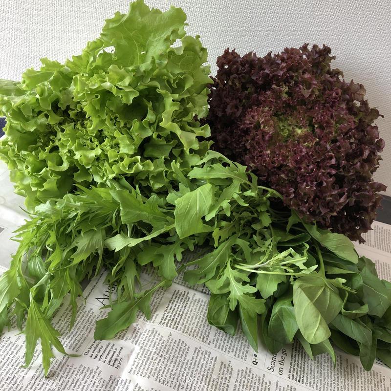 中伊豆サラダ野菜セット