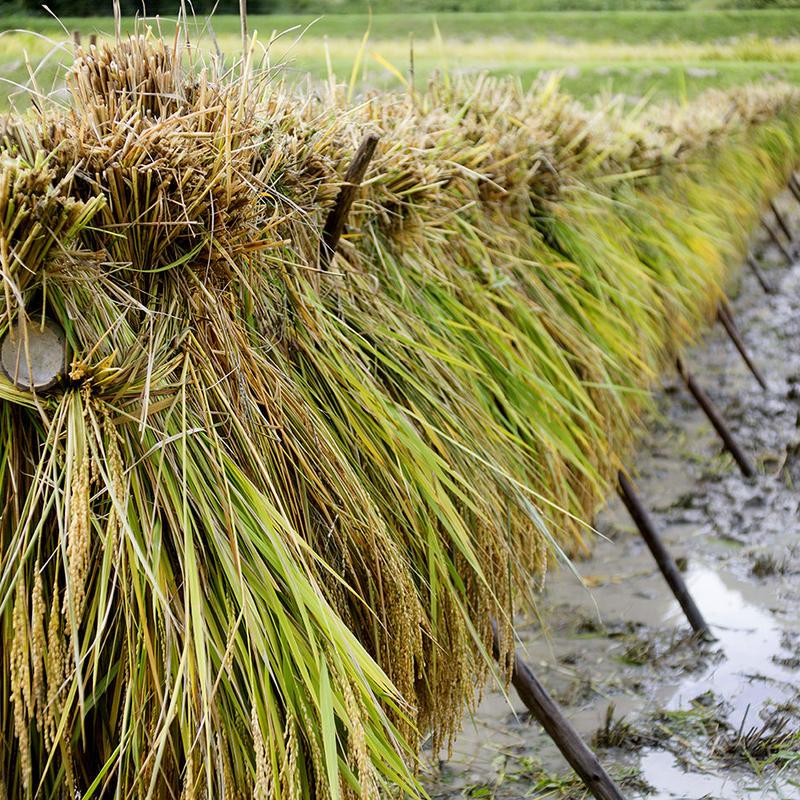 【送料無料】雲潤の里のおいしいお米(特別栽培米ゆうだい21)3㎏