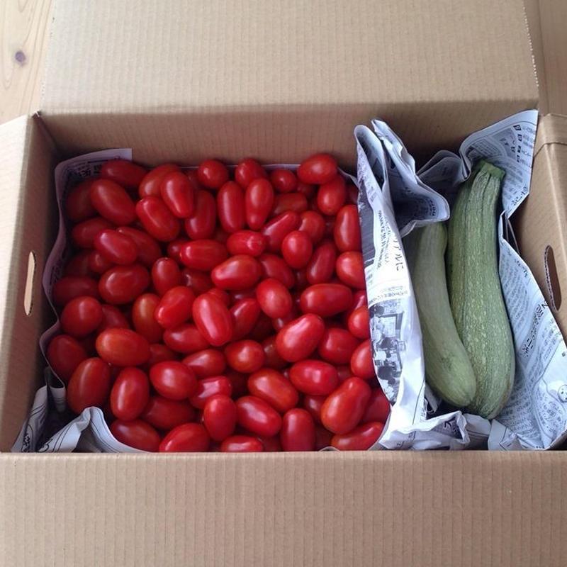 【露地栽培 イタリアンミニトマト ロッソナポリタン3kgバラ売り】 ※常温発送 送料込