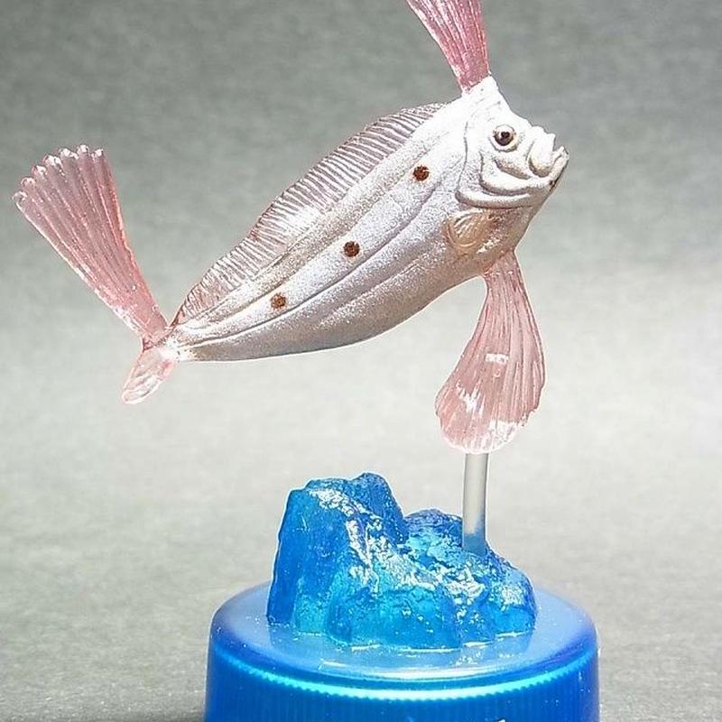 02.テンガイハタ(幼魚)