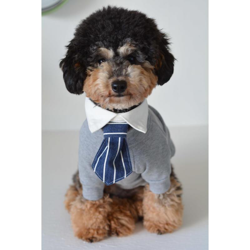 着け襟ネクタイセット/ホワイト