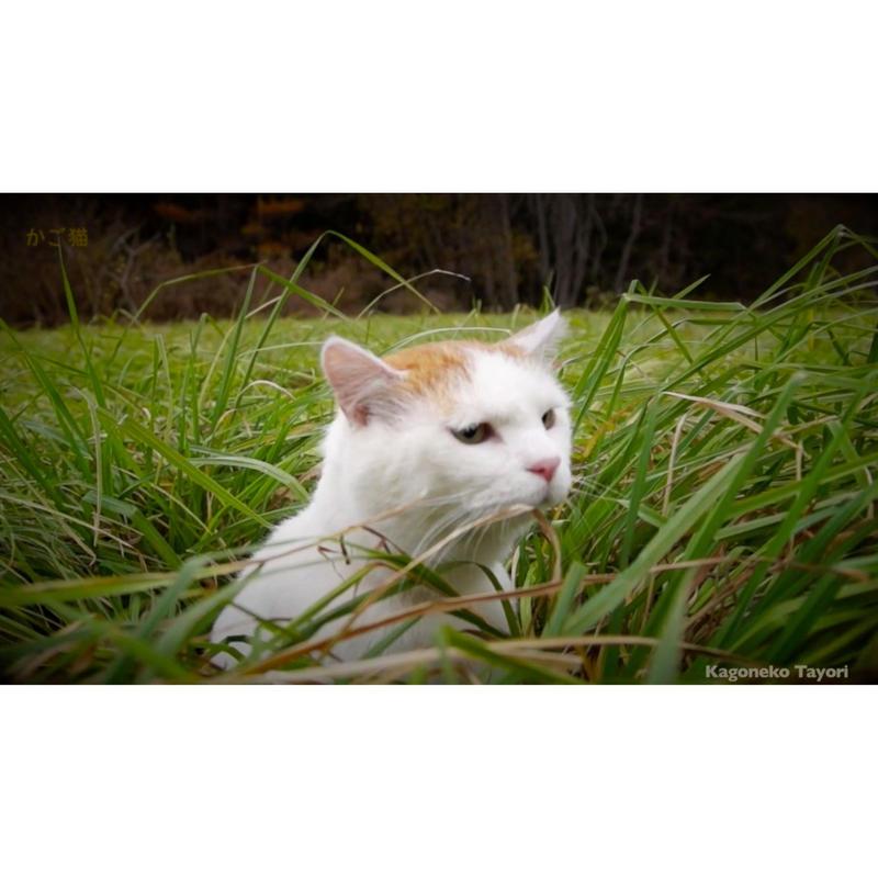 かご猫の里_シロのいく道