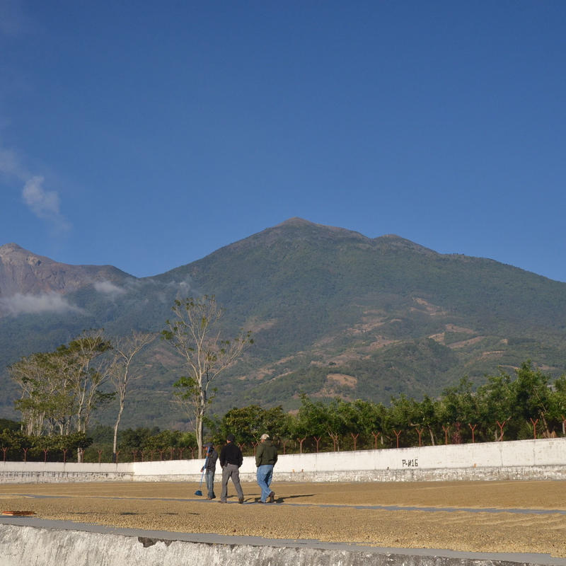 グァテマラ ラ・トラベシア農園 [やや深炒り]