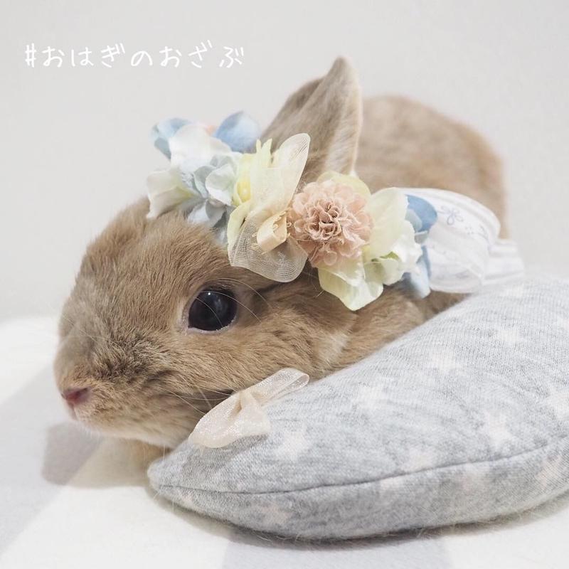 おはぎのおざぶ(桃)