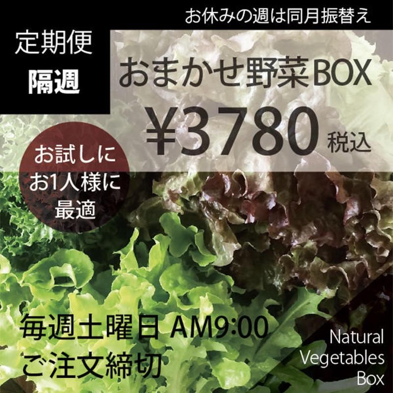 (隔週)おまかせ野菜BOX - Sサイズ