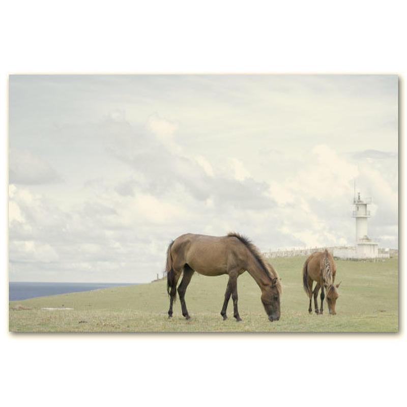 与那国馬ポストカード A