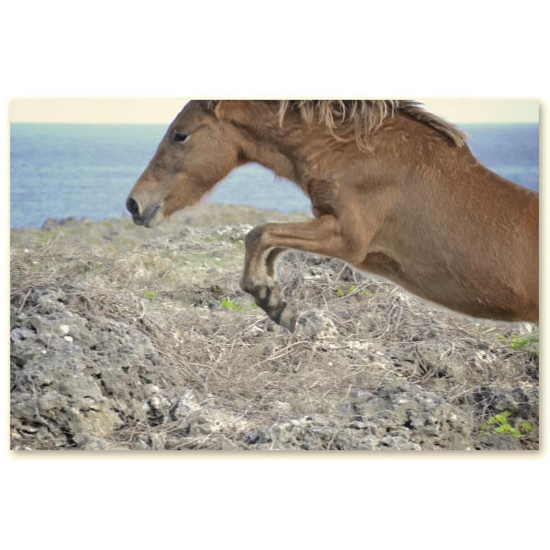 与那国馬ポストカード D