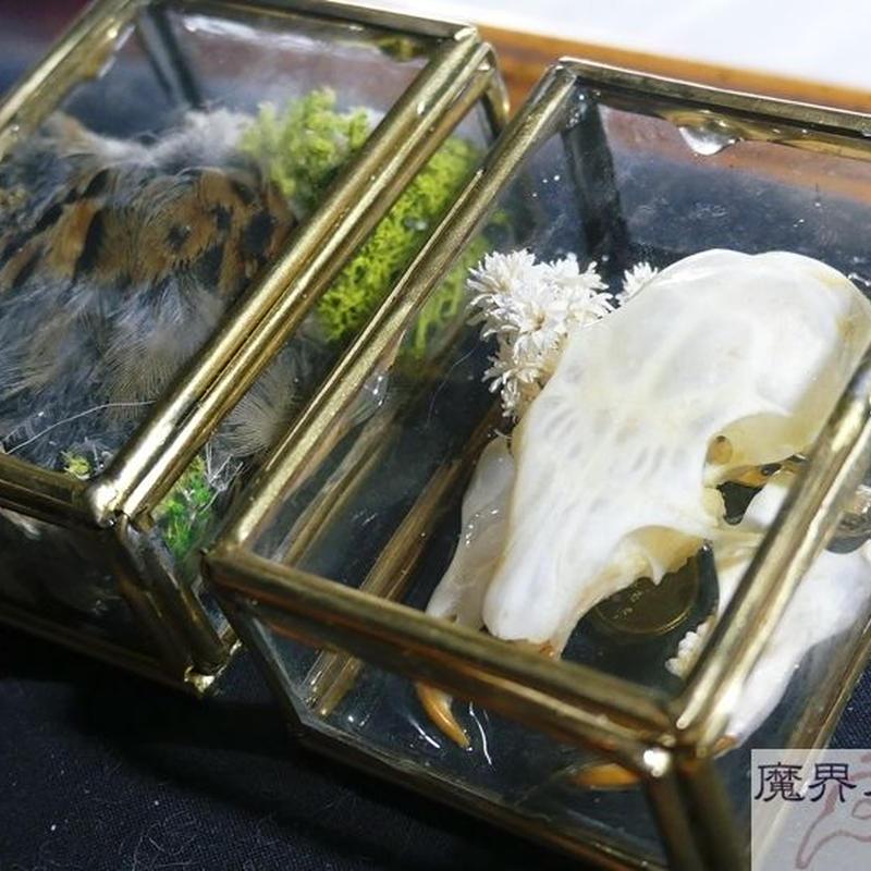 硝子小箱の剥製ブローチ(中)