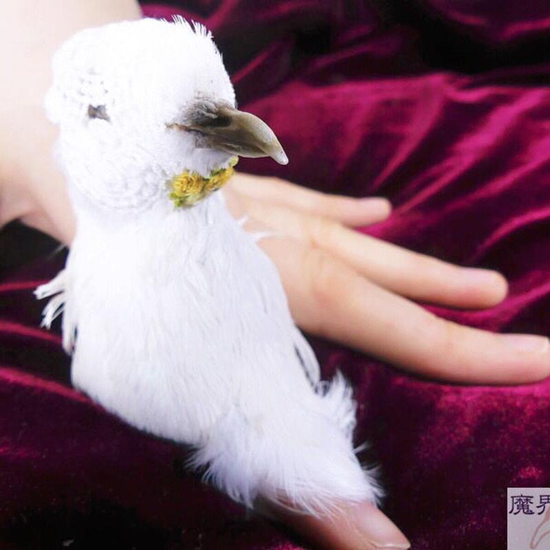 白鳩のリング