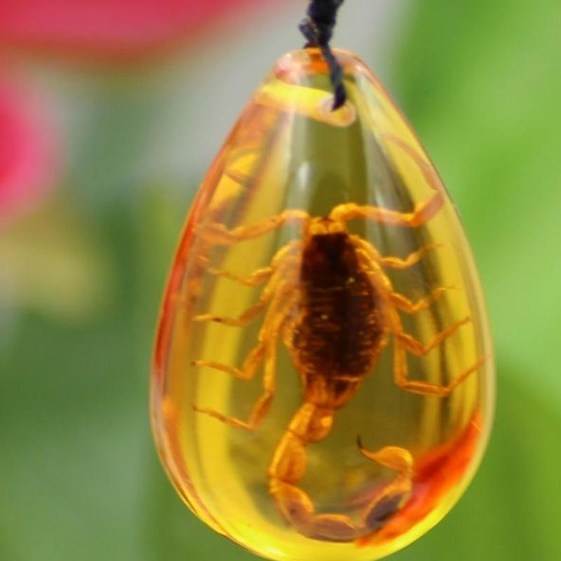真の昆虫の標本ペンダント