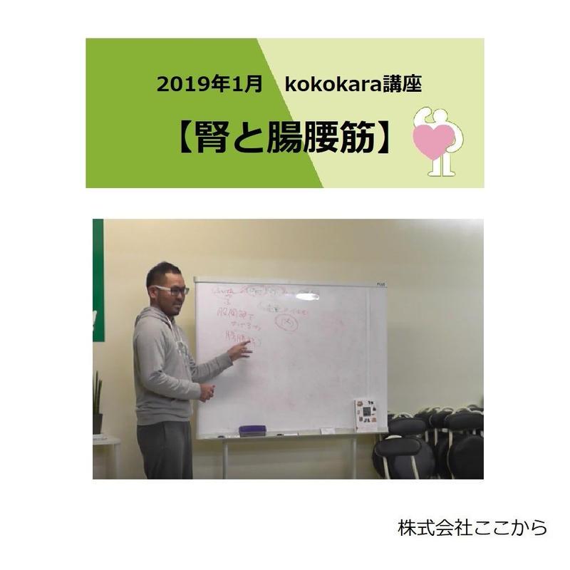 腎と腸腰筋(2019年1月kokokara講座)