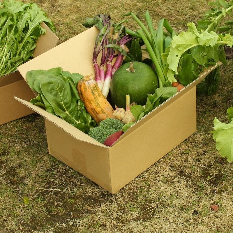 [月1箱お届け]田舎からのやさい定期便【木曜収穫】送料込み
