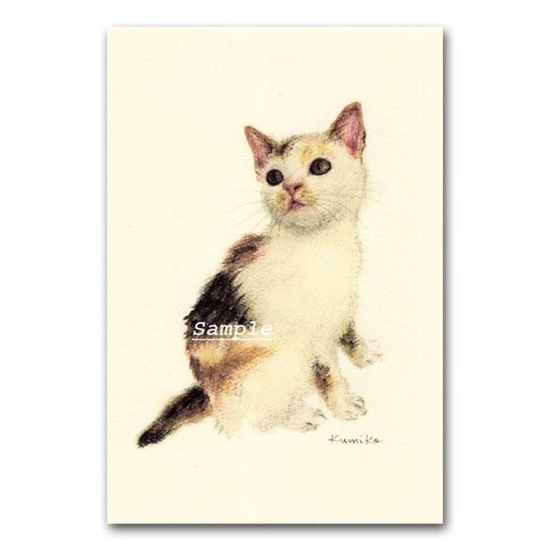 猫ポストカード17