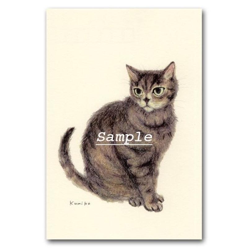 猫ポストカード23