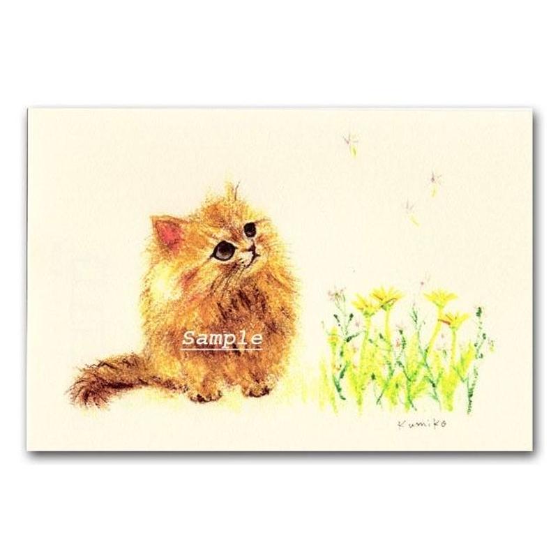 猫ポストカード13