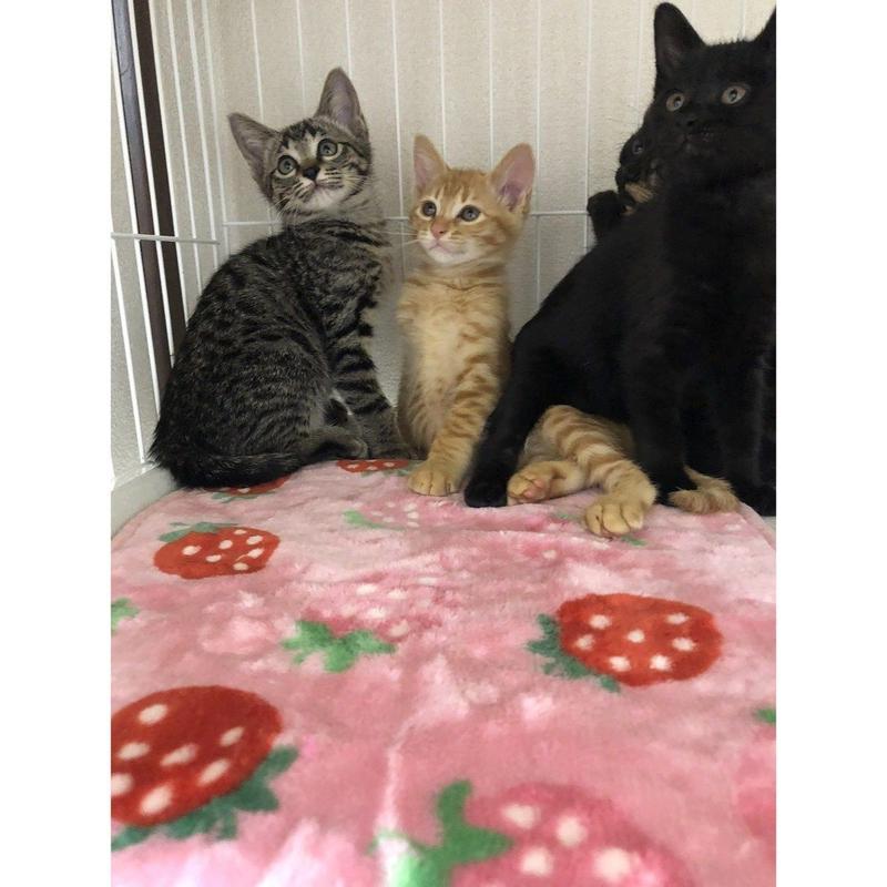 チビだった頃のキキ、ロロ、ヴィヴィ、チャチャの画像