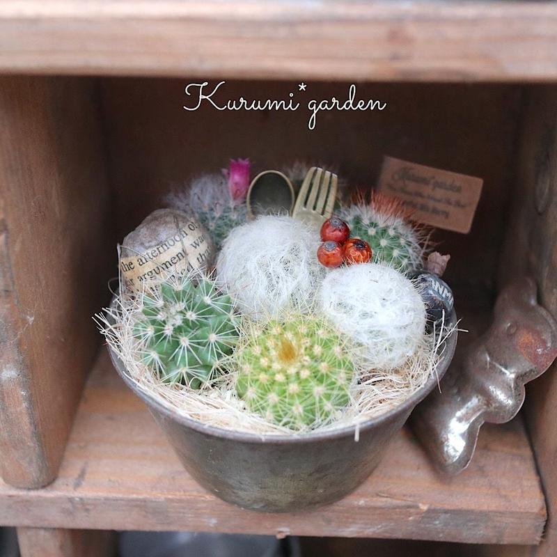 ヴィンテージのサボテンcup(1鉢)