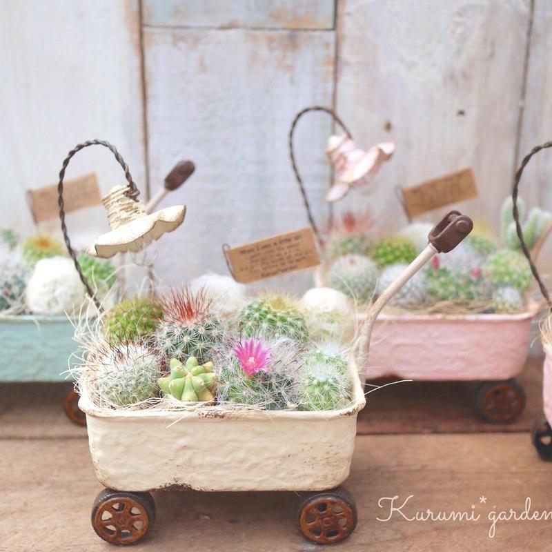 サボテンの花車