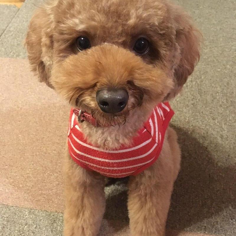 ペット(犬)1 チョコの紹介