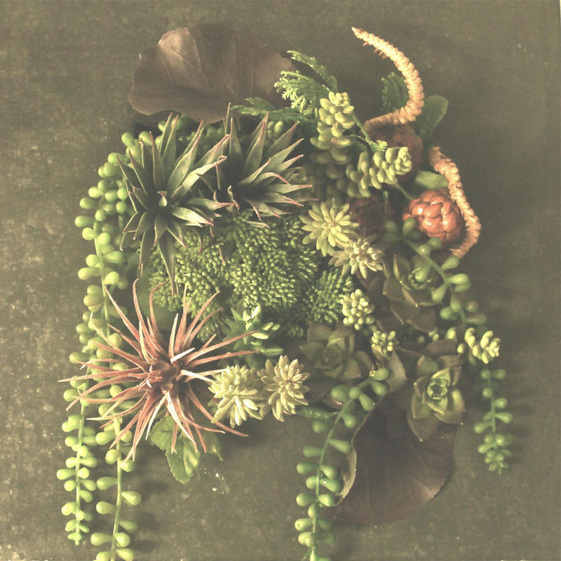 Design  アート多肉植物デザイン