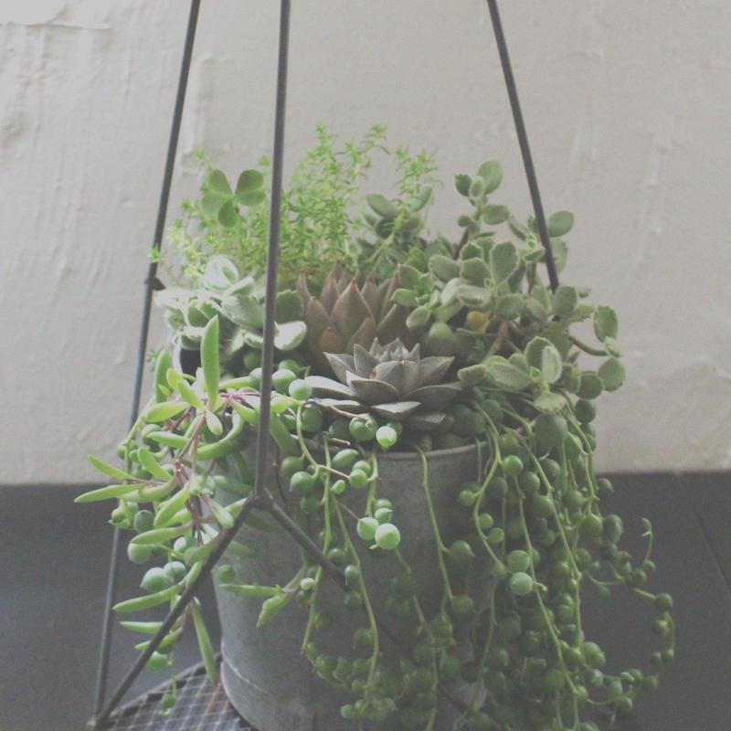 多肉植物の寄せ植え  Green  &  Succulent  Design