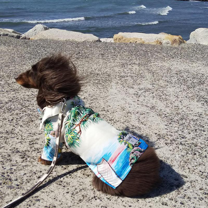 IOLANI DOG ALOHA SHIRTS イオラニ犬用アロハシャツ
